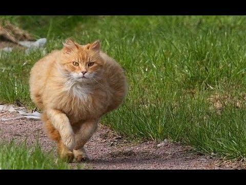 Kaķi drifto!