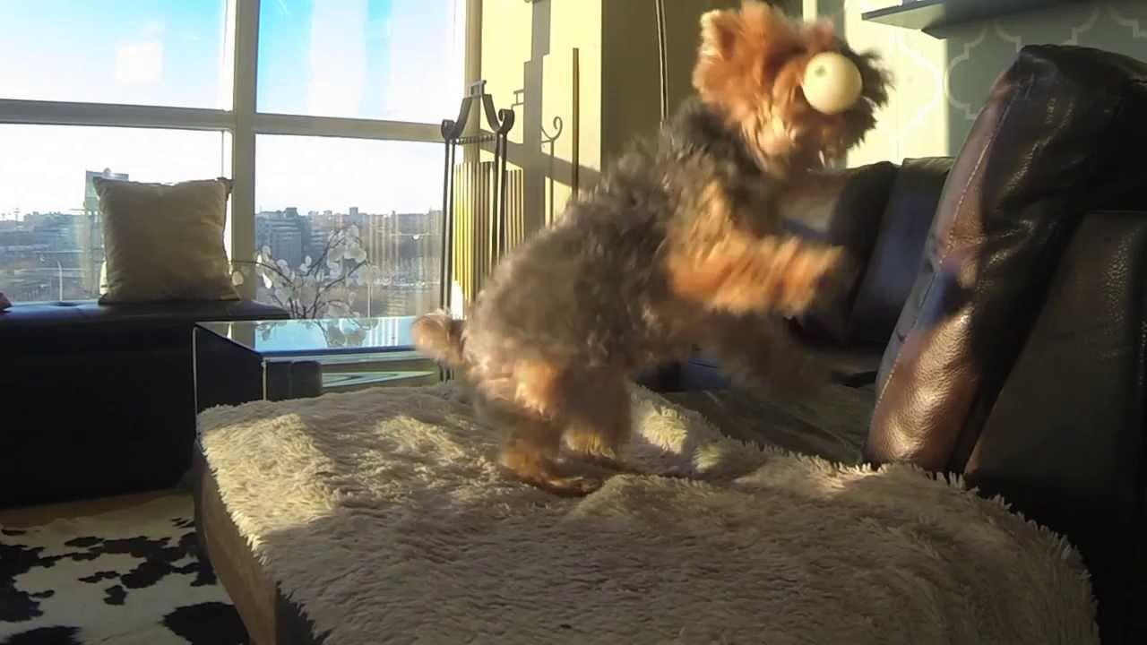 VIDEO – Ķēriens. (Catch)