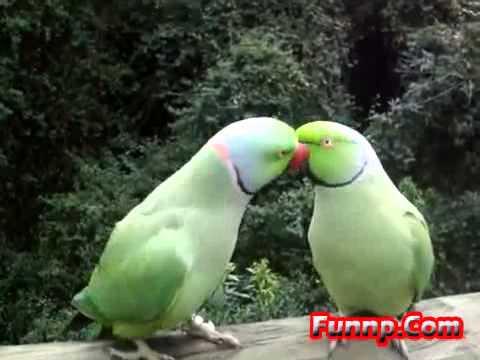 Papagaiļu sarunas!