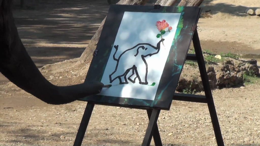 VIDEO – Zilonis uzzīmē pats sevi! (Elephant Paint Himself)