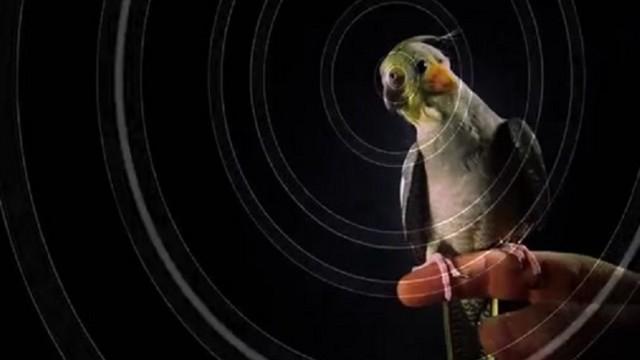 VIDEO: Super! Aizver acis un izbaudi! (Grab Your Headphones And Experience The Magic Of 3D Sound!)