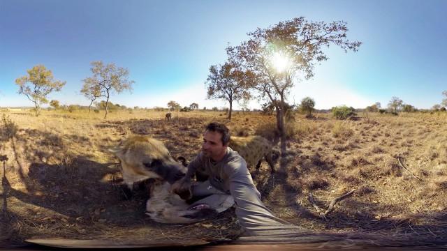 VIDEO: Iespaidīgi – video, kurā pats vari mainīt skatpunktu par 360 grādiem! (GoPro Spherical: Hyenas Wrestling With Kevin Richardson!)