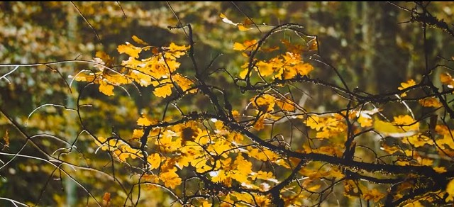 VIDEO: Kolosāli! Latvijas krāšņais rudens kājām gaisā!