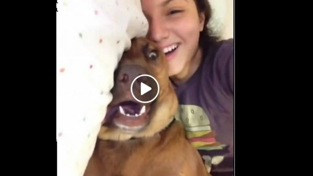 VIDEO: Lūk, kāpēc ar suņiem nekad nav garlaicīgi!