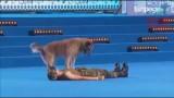 VIDEO: Nebija ne jausmas, ka suns ko tādu ir spējīgs iemācīties! Super! Vienreizīgi!