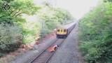VIDEO: Iereibis kungs cenšas šķērsot dzelzceļa sliedes brīdī, kad tuvojas vilciens..