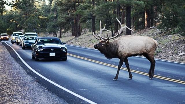 Uzmanies! Interaktīvā karte ar vietām, kur visbiežāk notiek sadursmes ar meža dzīvniekiem!