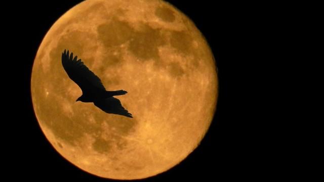 """14. novembra naktī pacel acis uz debesīm! Būs vērojams """"supermēness""""!"""