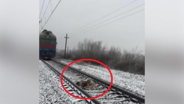 VIDEO: Viņš nepameta savu traumēto draugu uz sliedēm pat tad, kad strauji tuvojās vilciens…