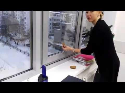 VIDEO: Nelaid vārnu iekštelpās, ja negribi palikt bez …