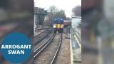 VIDEO: Tas brīdis, kad vilcienam jākursē gliemeža, tpfu, gulbja ātrumā..