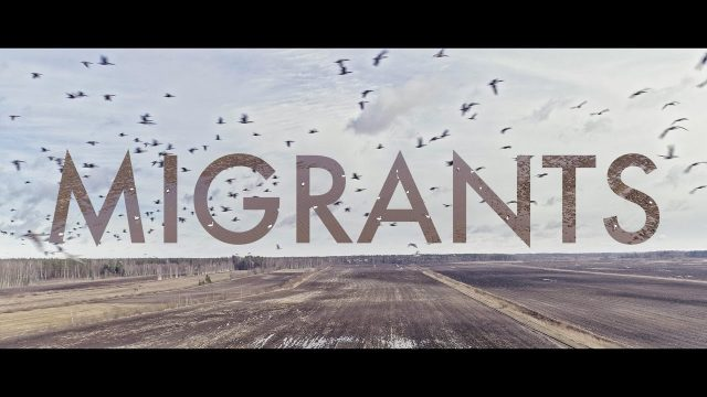 VIDEO: Lidojums kopā ar gājputniem | Flight through swarms of migratory birds in Latvia