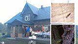 FOTO: Latviešu ģimene tīrot vecu lauku māju, zem grīdas atrod ko pavisam NEGAIDĪTU!