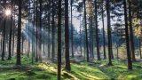 Baldones novadā trīs personu banda aizved vīrieti uz mežu – piekauj, aplaupa un atstāj mežā…
