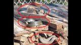 VIDEO: Nepatīkams pārsteigums! Vasarnīcu Krāslavā apsēdušas čūskas!