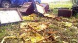 FOTO: Lācis Pālē pamatīgi izposta bitenieka bišu saimi!