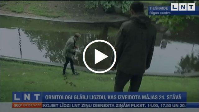 VIDEO: Pozitīvi! Sirsnīga mežapīļu glābšanas operācija tepat Rīgā!