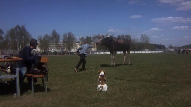 """VIDEO: Kā cilvēki pie """"Ušakova kepkas"""" alni ar burkāniem baroja!?"""