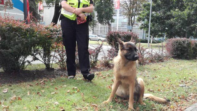VIDEO: Garāmgājēji kopā ar policistiem izglābj pie Alfas noklīdušu suņuku!