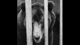 Iemidzinātā lāča Bargā saimnieka dēls publicē skarbu viedokli par notikušo!