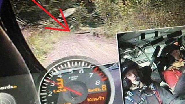 FOTO: Nesmuki! Vai Latvijas Vorobjova/Pūķa rallija ekipāžai uz ceļa apzināti likti akmeņi un koki!?