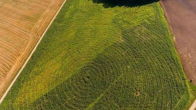 VIDEO: Šis ir jāizmēģina! Ģimene no Kazdangas kukurūzas laukā izveido MILZU labirintu!