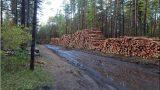FOTO: Ārprāts! Rīgā masveidā tiek izzāģēts Biķernieku mežs! Kurš par to ir atbildīgs?