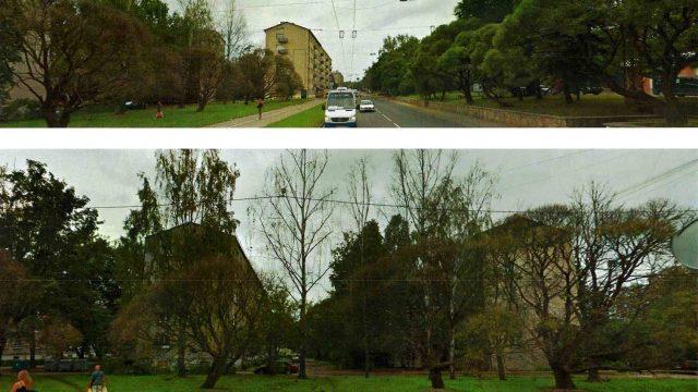FOTO: Neticami! Rīgas centrā zemes īpašnieks noindē 20 kokus, lai zemi varētu apbūvēt!