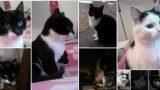 """FOTO: Šiem trīs kaķēniem draud """"iemidzināšana""""! Varbūt Tev ir iespēja palīdzēt?"""