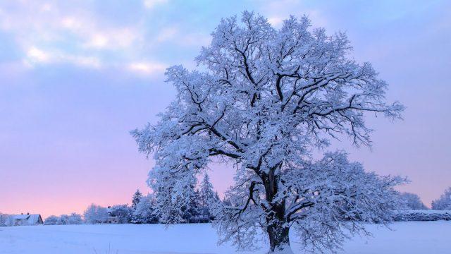 Vai Latvijā beidzot būs īsta ziema? Jau šonedēļ gaidāms pamatīgs sals līdz -16 grādiem!