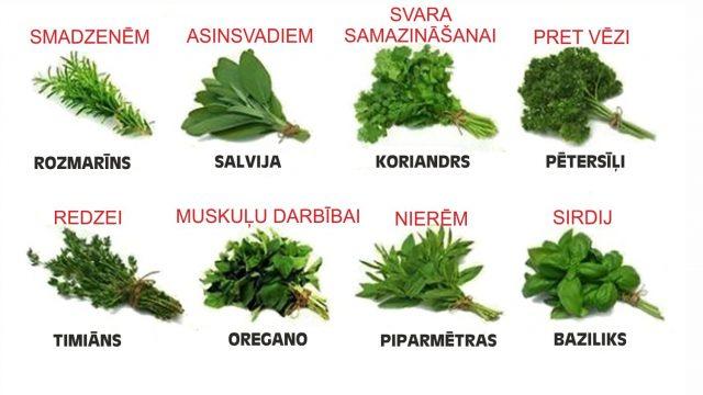 Ārstniecības un garšaugu dārziņš uz palodzes: Kā izveidot un kurus augus izvēlēties?
