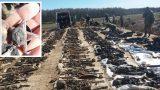 FOTO: Saldus novadā atrod 145 Sarkanās armijas kareivju mirstīgās atliekas