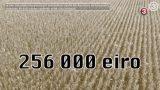 VIDEO: Aizdomas, ka ZZS deputāts, kurš saņēma 256 000 eiro plūdu kompensāciju, blēdījies!